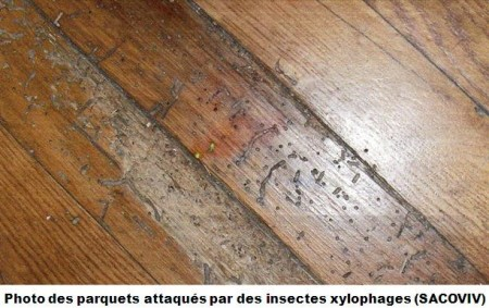 Sos bois traitement de parquet et escalier for Vers de bois traitement